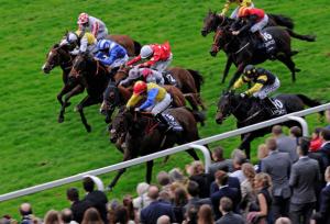 Best Horse Racing Database