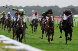 Best Horse Racing Racecards