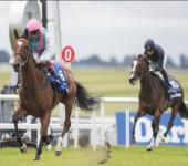Enable & Create Horse Racing Database